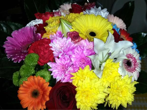 Oslava kvety
